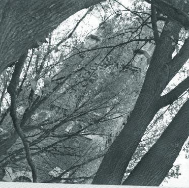 Ces bois qui pleurent, récit. Photographies de joanne Tremblay.